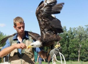northeast falconry